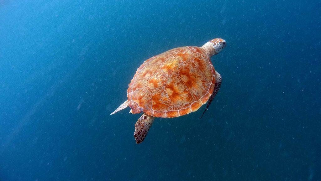 turtle-1446727_1280