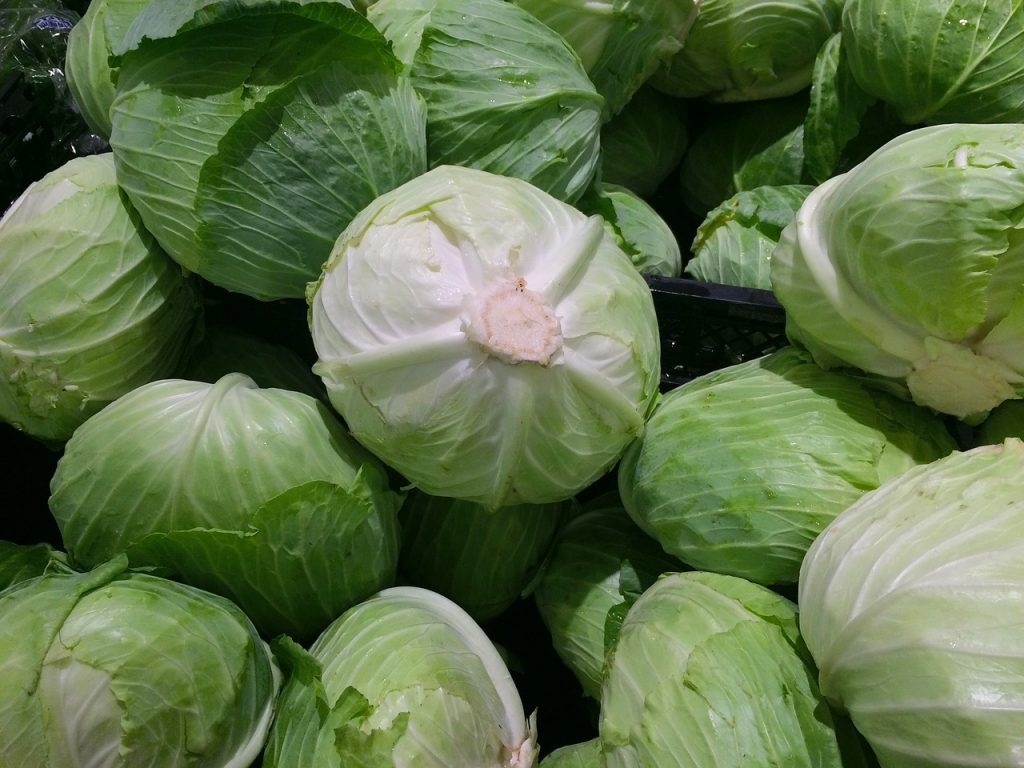 cabbage-1666765_1280